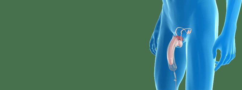vitallusPLUS® Penisvergrößerung & Penisverlängerung